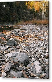 Along Eighteen Mile Creek Acrylic Print by Tom Brickhouse