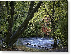 Along Swift Waters Acrylic Print by Priscilla Burgers
