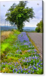Along The By Ways Acrylic Print by Joan Bertucci