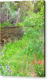 Acrylic Print featuring the photograph Along The Creek by Marilyn Diaz