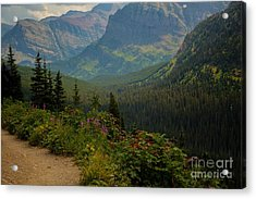 Along The Path To Iceburg Lake 21 Acrylic Print by Natural Focal Point Photography