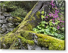 Acrylic Print featuring the photograph Along The Pathway by Priya Ghose