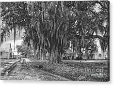 Along The River Road Near Vacherie La Acrylic Print