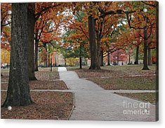 Along The Walk - Unc Chapel Hill Acrylic Print