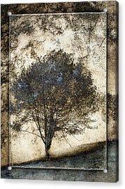 Along The Yachats River Road Acrylic Print by Carol Leigh
