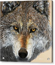Acrylic Print featuring the painting Alpha Male by Debbie Chamberlin
