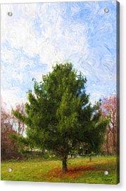 Acrylic Print featuring the digital art Alpha Spring Pine by Spyder Webb