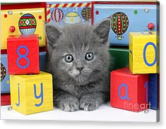 Alphabet Cat Ck415 Acrylic Print by Greg Cuddiford