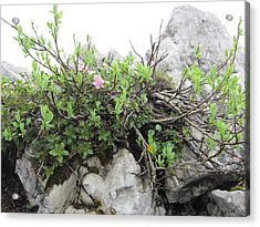 Acrylic Print featuring the photograph Alpine Beauty by Pema Hou