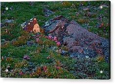 Acrylic Print featuring the photograph Alpine Blush by Jim Garrison
