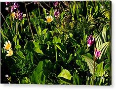 Alpine Fresh  Acrylic Print by Tim Rice
