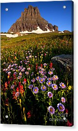 Alpine Meadow Acrylic Print by Aaron Whittemore