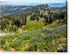 Alpine Meadow Acrylic Print by Robert Bales