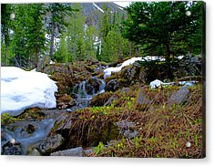 Acrylic Print featuring the photograph Alpine Spring  by Kevin Bone