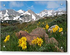 Acrylic Print featuring the photograph Alpine Sunflower Mountain Landscape by Cascade Colors