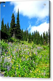 Acrylic Print featuring the photograph Alpine Walk by Kathy Bassett