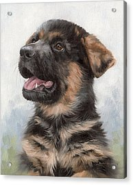 Alsatian Puppy Painting Acrylic Print by Rachel Stribbling