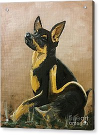 Alsatian Puppy Scratching Acrylic Print by Isabella F Abbie Shores FRSA