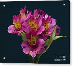 Acrylic Print featuring the photograph Alstroemeria Cluster by ELDavis Photography