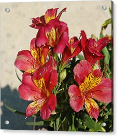 Alstroemeria In Pastel Acrylic Print by Suzanne Gaff