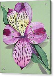 Alstroemeria No.1 Acrylic Print