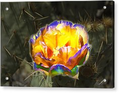Altered Yellow Prickly Pear Flower Acrylic Print