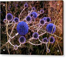 Acrylic Print featuring the photograph Alternate Universe by Rona Black