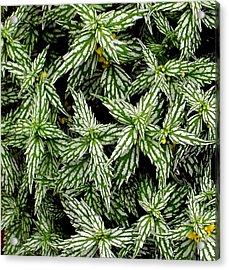 'aluminum Plant Close-up' Acrylic Print