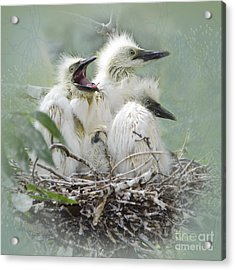 Always One In A Crowd Acrylic Print by Betty LaRue