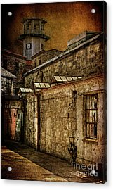 Always Watching Acrylic Print by Lois Bryan