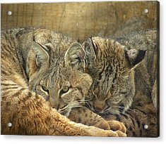 Always Watching Acrylic Print by Teresa Schomig