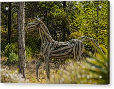 Alys Beach Driftwood Horse Acrylic Print by Frank Feliciano