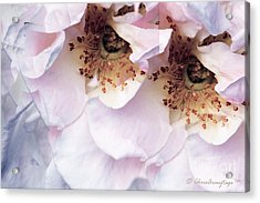 Acrylic Print featuring the photograph Am I Not Pretty Enough ... by Chris Armytage
