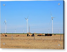 Amarillo By Morning Acrylic Print by Donna Kennedy