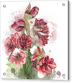 Amaryllis Flowers - 4. - Elena Yakubovich Acrylic Print