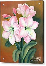Amaryllis For Ladies Acrylic Print