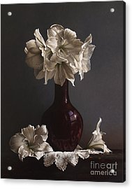Amaryllis  Acrylic Print by Larry Preston