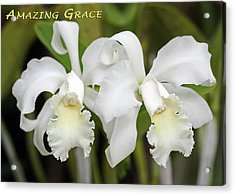 Amazing Grace Acrylic Print by Dawn Currie