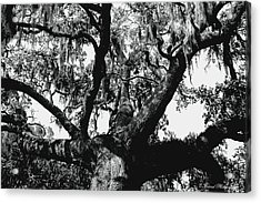 Amazing Oak Tree Acrylic Print