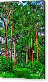 Amazing Rainbow Eucalyptus Acrylic Print by DJ Florek