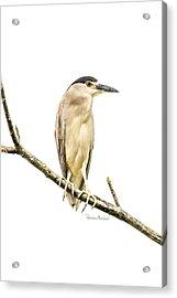 Amazonian Heron Acrylic Print