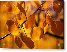 Amber Leaves Acrylic Print