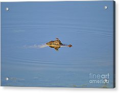 Amberwing Atop Alligator Acrylic Print