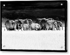 Amboseli Herd With Egret Acrylic Print