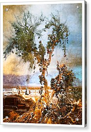 Amboy Shoe Tree Acrylic Print