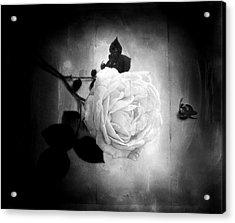 Ambridge English Rose Acrylic Print by Louise Kumpf