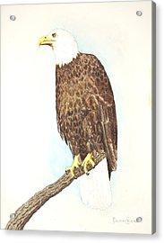 American Bald Eagle Watching Acrylic Print by Dag Sla