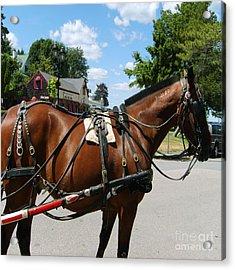 American Bay Quarter Horse Acrylic Print
