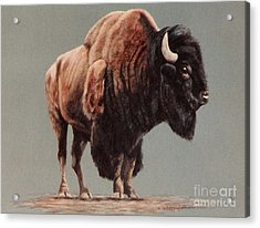 Acrylic Print featuring the painting American Bison by DiDi Higginbotham