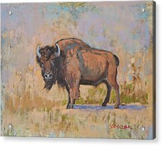 American Bison Acrylic Print by Sal Vasquez